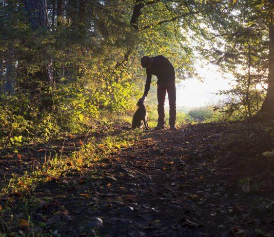 Hundeskove og regler for hunde i naturen