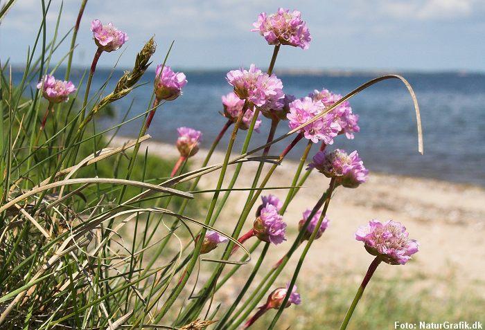 Strandens planter